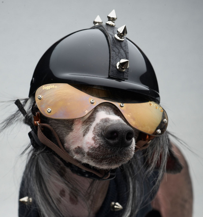 motorcycle helmet spikes on dog size helmet