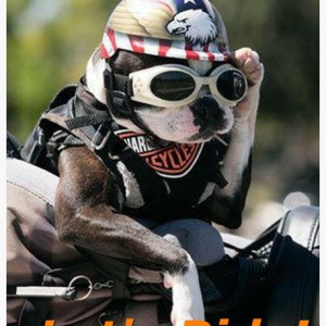 Image result for pictures of doggie riding goggles