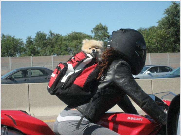 Motorcycle Helmets For Dogs Man S Best Friend