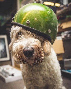 Dog with helmet on from lowbrowcustoms for animal motorcycle helmet