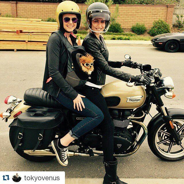 Animal Motorcycle Helmets