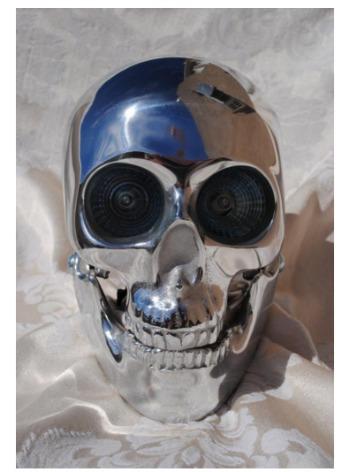 Skull Obsessions