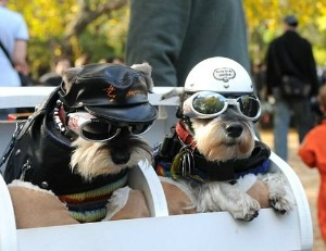 biker dogs with doggles