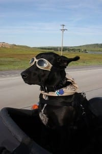 how to put on doggles