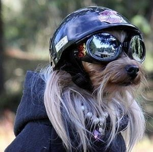 Doggles Small Dog Harness