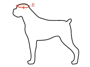 measuring tips for doggles